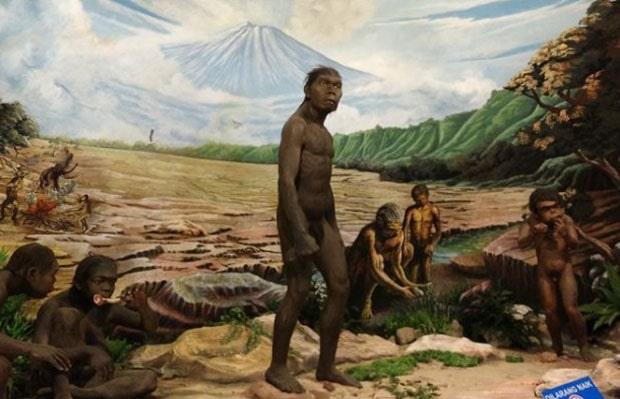 fakta museum manusia purba sangiran